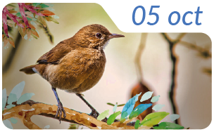 Dia nacional de las aves11-01