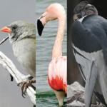 Aves de Mendoza