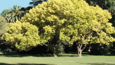 árbol imagen-01