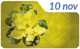 Dia de la flor provinvial 2-01