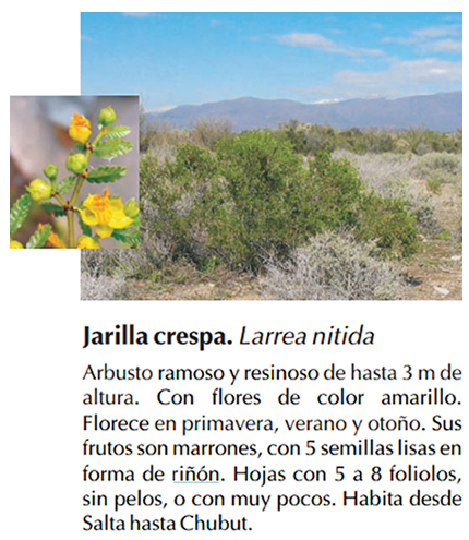 jarilla_crespa