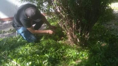 Servicios Generales_Limpieza jardines_DOAITE_01